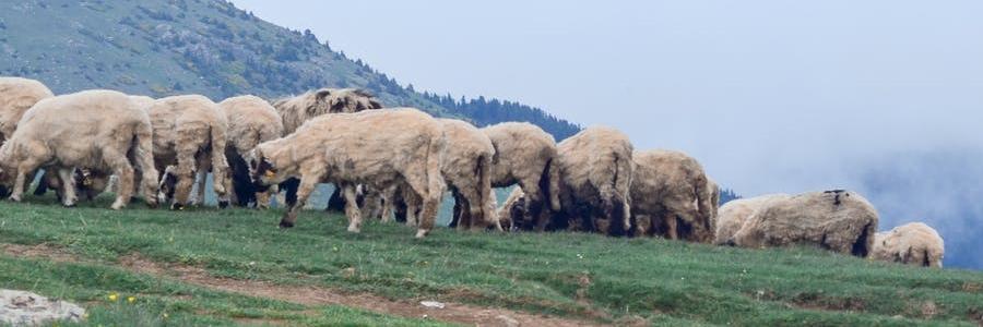 Liedsuggestie: Psalm 23 'Mijn Herder is de Heer'- Maurice Pirenne